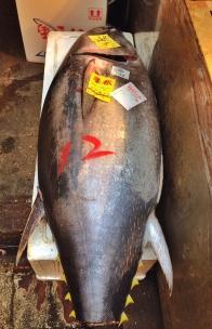Tuna at its best