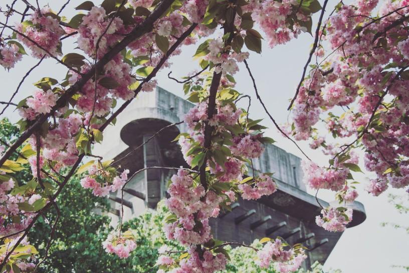 Flakturm mit Pflaumenblüten