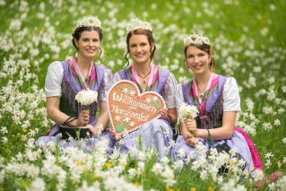 three little princesses amidst the famous daffodils of Austria