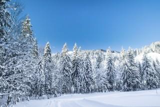 masses of snow